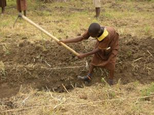 The children started digging the foundations for their new classrooms