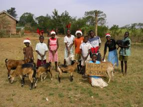 Goats galore!