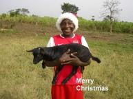 Merry Chirstmas - Nico goat herder