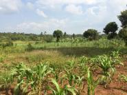 Field after field