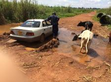 Even the cows were wondering what we were doing in their drinking water!