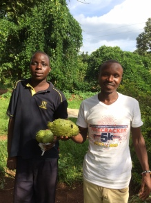 The boys asked me to pull over and I thought it was because we had nets to deliver but not this time, they had spotted a fruit they don't get to see very often - a custard apple! Known also as sweetsop! Makes a great drink when mixed with passion fruit!