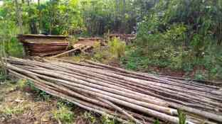 The poles came from saplings found locally